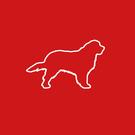 Wild Dog Design
