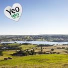 YEO VALLEY FARMS (PRODUCTION) LIMITED